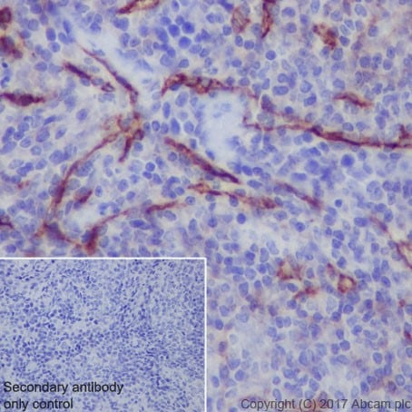 Immunohistochemistry (Formalin/PFA-fixed paraffin-embedded sections) - Anti-ICAM2 antibody [EPR18231-183] - BSA and Azide free (ab224531)