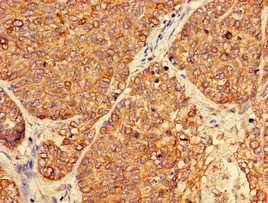 Immunohistochemistry (Formalin/PFA-fixed paraffin-embedded sections) - Anti-PER3 antibody (ab224594)