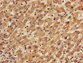 Immunohistochemistry (Formalin/PFA-fixed paraffin-embedded sections) - Anti-TGDS antibody (ab224599)