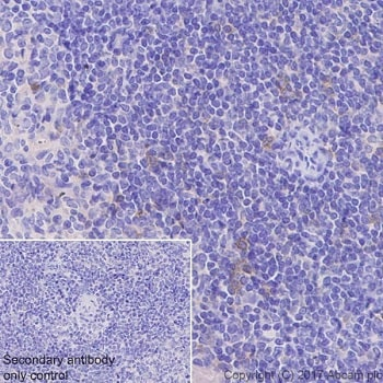 Immunohistochemistry (Formalin/PFA-fixed paraffin-embedded sections) - Anti-ICOS antibody [EPR20560] (ab224644)