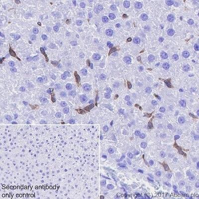 Immunohistochemistry (Formalin/PFA-fixed paraffin-embedded sections) - Anti-Heme Oxygenase 1 antibody [EPR18161-128] - BSA and Azide free (ab224677)
