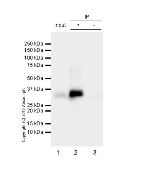 Immunoprecipitation - Anti-BAFF antibody [EPR22238] (ab224710)
