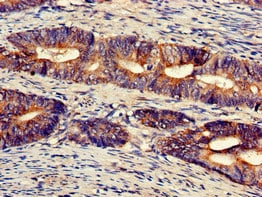 Immunohistochemistry (Formalin/PFA-fixed paraffin-embedded sections) - Anti-UFM1 antibody (ab224733)