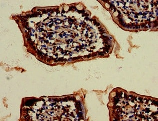 Immunohistochemistry (Formalin/PFA-fixed paraffin-embedded sections) - Anti-VPS4B/MIG1 antibody (ab224736)