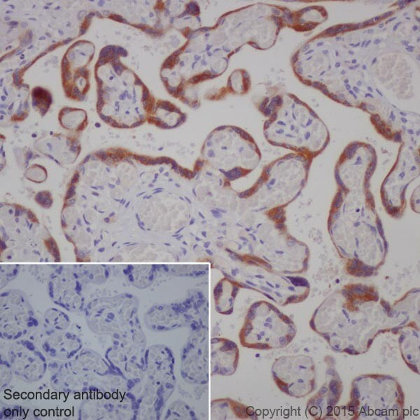 Immunohistochemistry (Formalin/PFA-fixed paraffin-embedded sections) - Anti-Granulin antibody [EPR15864] - Low endotoxin, Azide free (ab225532)