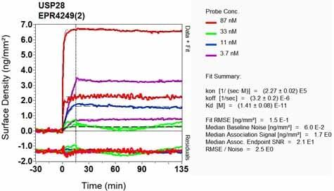 Other - Anti-USP28 antibody [EPR4249(2)] - BSA and Azide free (ab225537)