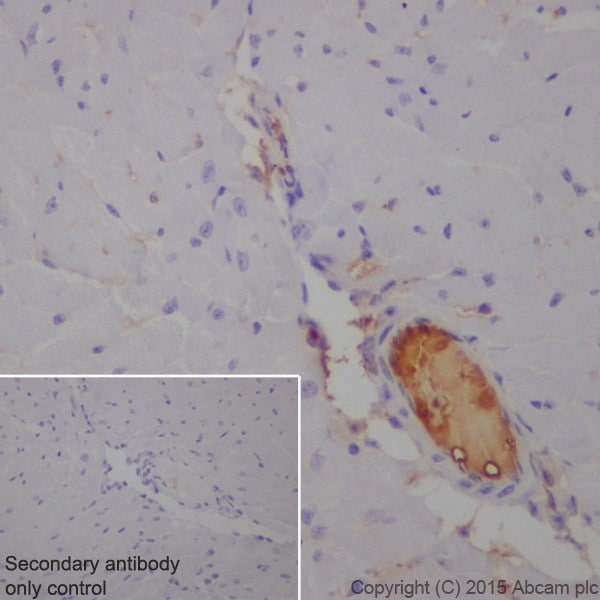 Immunohistochemistry (Formalin/PFA-fixed paraffin-embedded sections) - Anti-C3 antibody [EPR19394] - Low endotoxin, Azide free (ab225539)