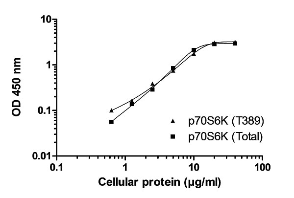 Example of p70S6K (pT389) and p70S6K (Total) cell lysate standard curve