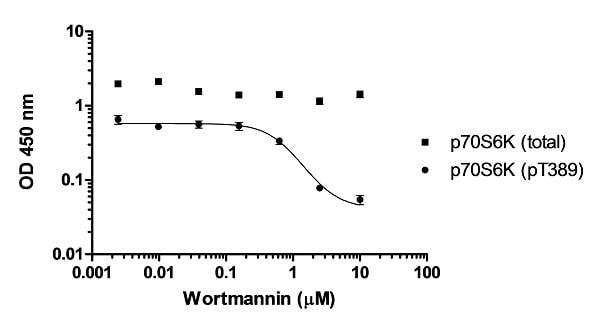 Inhibition of p70S6K (pT389) phosphorylation in MCF-7 cells in response to wortmannin treatment