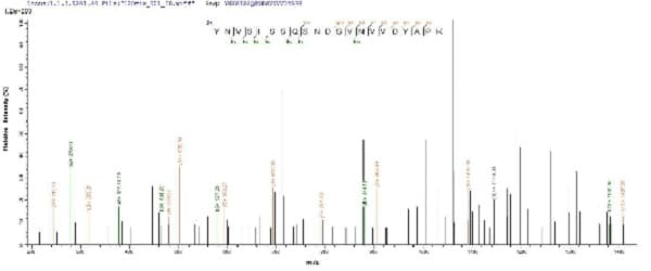 Mass Spectrometry - Recombinant Staphylococcus aureus hlgB protein (His tag) (ab225605)