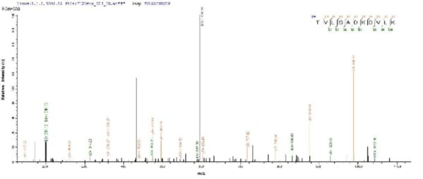 Mass Spectrometry - Recombinant uvsY protein (His tag) (ab225610)
