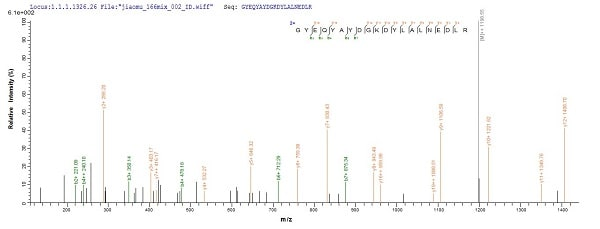 Mass Spectrometry - Recombinant Human HLA G protein (His tag) (ab225660)