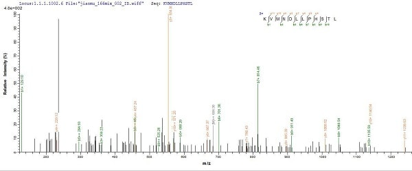 Mass Spectrometry - Recombinant Woodchuck Interferon gamma protein (His tag) (ab225661)