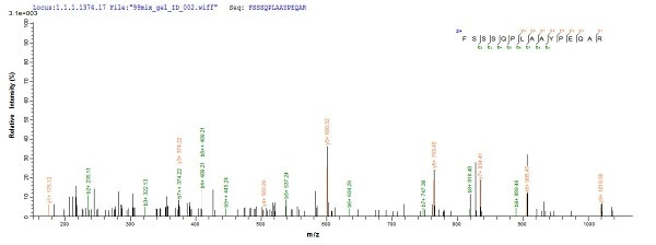 Mass Spectrometry - Recombinant algL protein (Tagged) (ab225669)