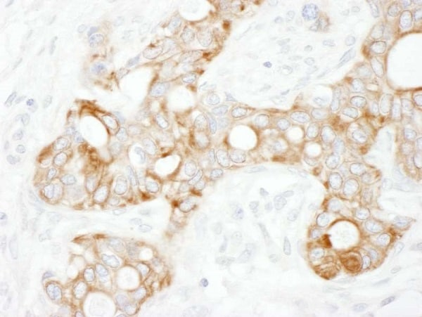 Immunohistochemistry (Formalin/PFA-fixed paraffin-embedded sections) - Anti-TRAF2 antibody (ab225888)
