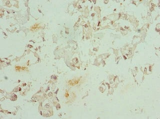 Immunohistochemistry (Formalin/PFA-fixed paraffin-embedded sections) - Anti-CFDP1 antibody (ab225909)
