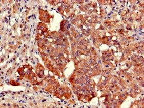 Immunohistochemistry (Formalin/PFA-fixed paraffin-embedded sections) - Anti-EARS2 antibody (ab225913)
