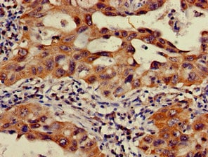 Immunohistochemistry (Formalin/PFA-fixed paraffin-embedded sections) - Anti-OS9 antibody (ab225915)