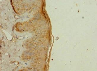 Immunohistochemistry (Formalin/PFA-fixed paraffin-embedded sections) - Anti-GTL3 antibody (ab225952)