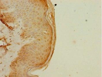 Immunohistochemistry (Formalin/PFA-fixed paraffin-embedded sections) - Anti-ELF2/NERF antibody (ab225958)