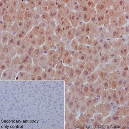 Immunohistochemistry (Formalin/PFA-fixed paraffin-embedded sections) - Anti-SHP1 antibody [Y476] - BSA and Azide free (ab226008)