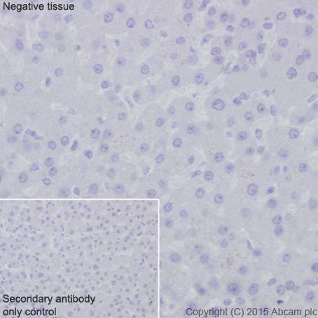 Immunohistochemistry (Formalin/PFA-fixed paraffin-embedded sections) - Anti-GLP1 antibody [EPR4042-1] - BSA and Azide free (ab226036)
