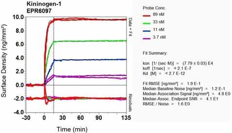 OI-RD Scanning - Anti-Kininogen 1 antibody [EPR6097] - BSA and Azide free (ab226087)