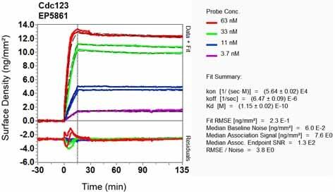 OI-RD Scanning - Anti-CDC123 antibody [EP5861] - BSA and Azide free (ab226111)