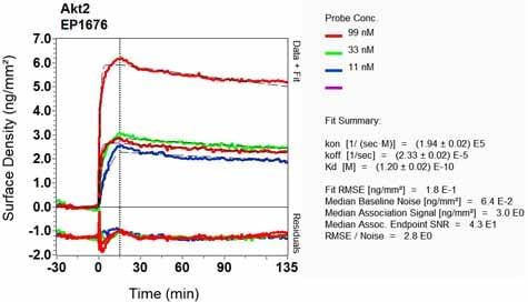 OI-RD Scanning - Anti-AKT2 antibody [EP1676] - BSA and Azide free (ab226115)