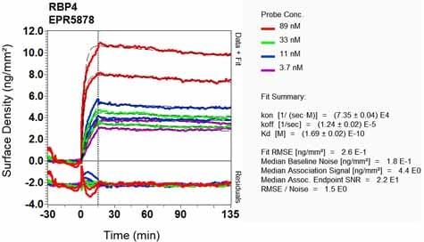Other - Anti-RBP4 antibody [EPR5878] - BSA and Azide free (ab226137)