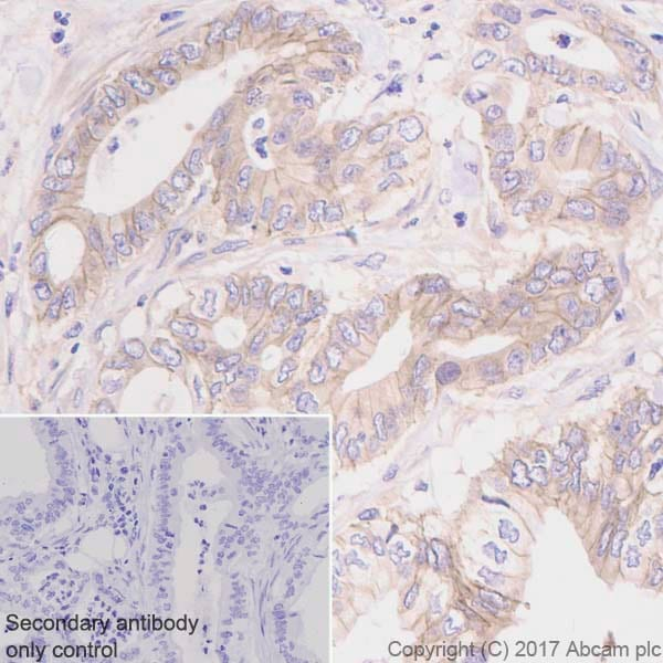 Immunohistochemistry (Formalin/PFA-fixed paraffin-embedded sections) - Anti-Eotaxin antibody [EPR5825] - BSA and Azide free (ab226143)