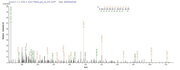 Mass Spectrometry - Recombinant Human TEF1/TEAD-1 protein (His tag) (ab226236)
