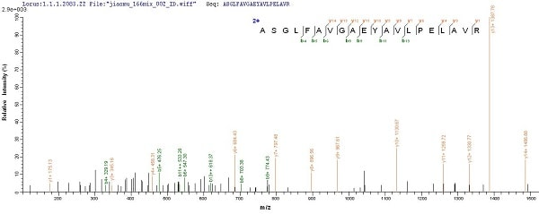 Mass Spectrometry - Recombinant OmpA protein (Tagged) (ab226269)