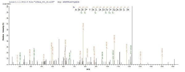 Mass Spectrometry - Recombinant Mouse GFAP protein (His tag) (ab226309)