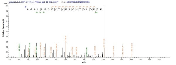 Mass Spectrometry - Recombinant Mouse RPLP0 protein (Tagged) (ab226428)