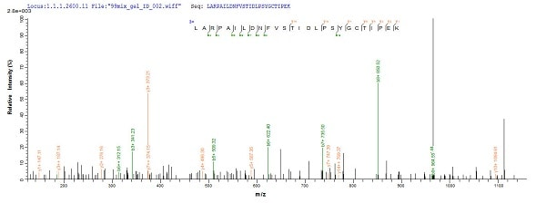 Mass Spectrometry - Recombinant Rat HGF protein (Tagged) (ab226452)