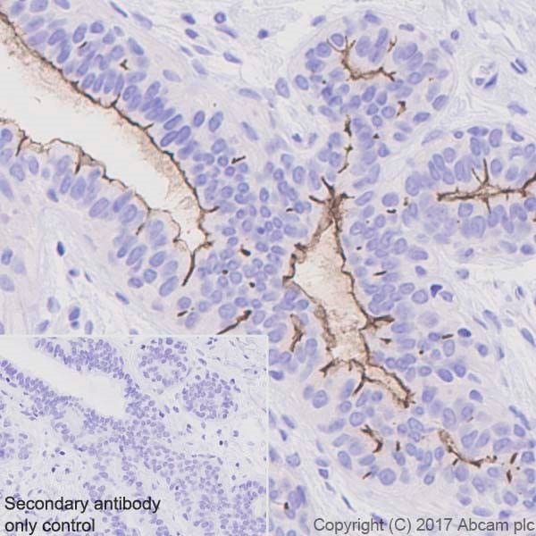 Immunohistochemistry (Formalin/PFA-fixed paraffin-embedded sections) - Anti-CD133 antibody [EPR20980-104] - BSA and Azide free (ab226484)