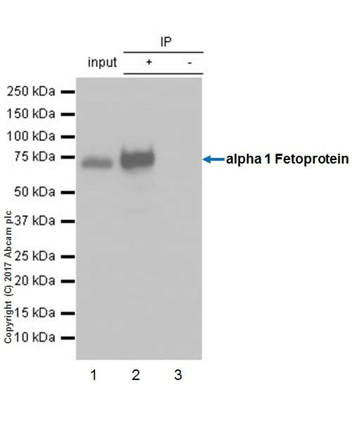Immunoprecipitation - Anti-alpha 1 Fetoprotein antibody [EPR19240-133] - BSA and Azide free (ab226488)