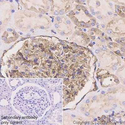 Immunohistochemistry (Formalin/PFA-fixed paraffin-embedded sections) - Anti-VAMP2 antibody [EPR20818] - BSA and Azide free (ab226863)