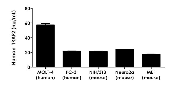 Mouse extracts were assayed for reactivity