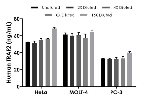Interpolated concentrations of native TRAF2 in Human HeLa Cell Extract and MOLT-4 Cell Extract based on a 1,000 µg/mL extract load, and Human PC-3 Cell Extract based on a 1,500 µg/mL extract load