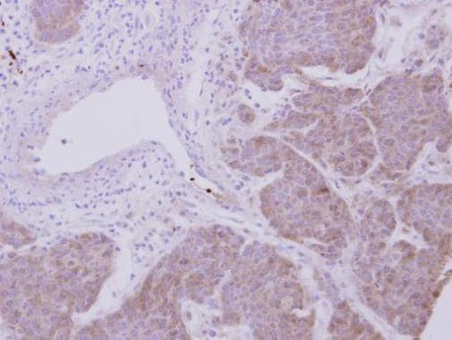 Immunohistochemistry (Formalin/PFA-fixed paraffin-embedded sections) - Anti-Peroxiredoxin 2/PRP antibody (ab226922)