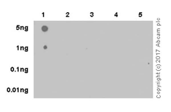 Dot Blot - Anti-Histone H3 (tri methyl K4) antibody [EPR20551-225] - BSA and Azide free (ab227060)