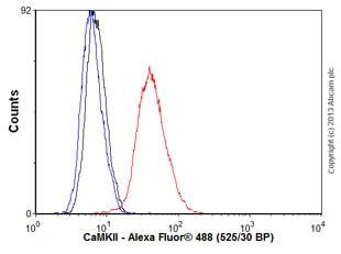 Flow Cytometry - Anti-CaMKII antibody [EPR6686(2)] - BSA and Azide free (ab227108)