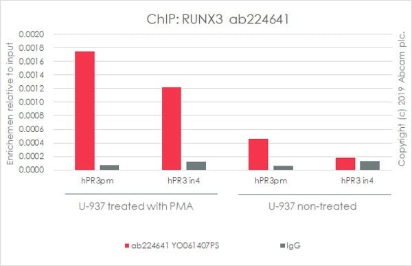 ChIP - Anti-RUNX3 antibody [EPR20687] - BSA and Azide free (ab227125)