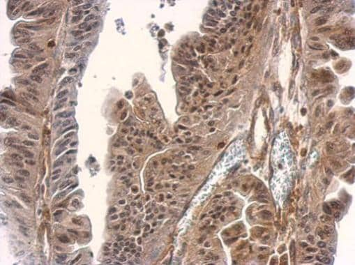 Immunohistochemistry (Formalin/PFA-fixed paraffin-embedded sections) - Anti-Smad3 antibody - ChIP Grade (ab227223)