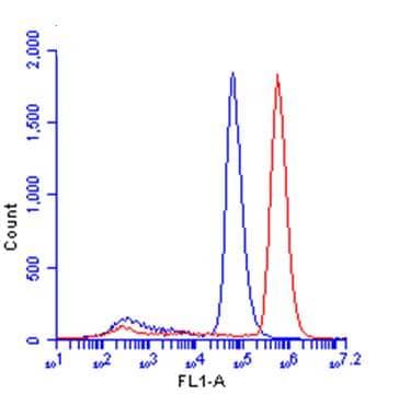 Flow Cytometry - Anti-beta Catenin antibody - ChIP Grade (ab227499)