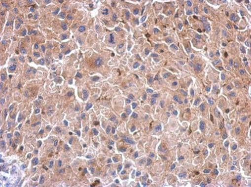 Immunohistochemistry (Formalin/PFA-fixed paraffin-embedded sections) - Anti-HIF1AN/FIH-1 antibody (ab227550)