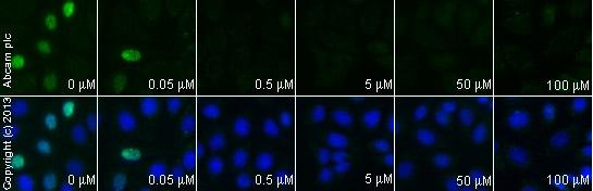 Immunocytochemistry/ Immunofluorescence - Anti-Cyclin D1 antibody [EP272Y] - BSA and Azide free (ab227561)