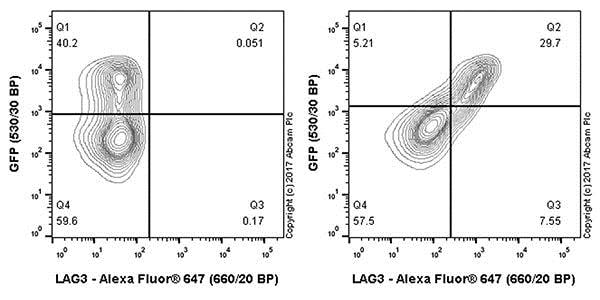 Flow Cytometry - Anti-LAG-3 antibody [EPR20261] - BSA and Azide free (ab227579)